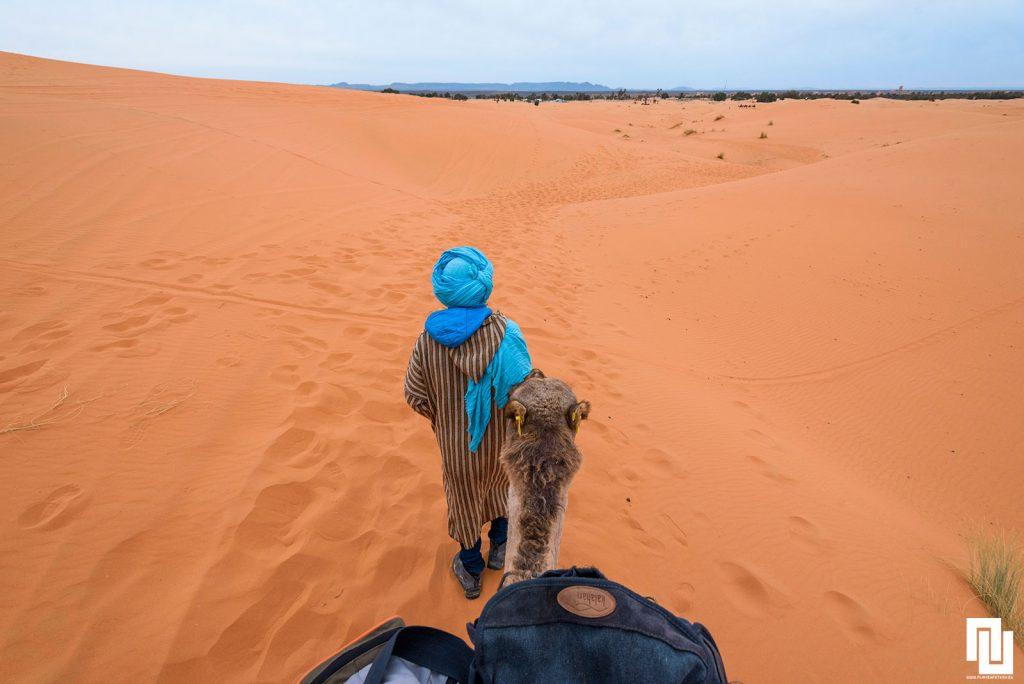 Боб Марли (камилата) и камиларя